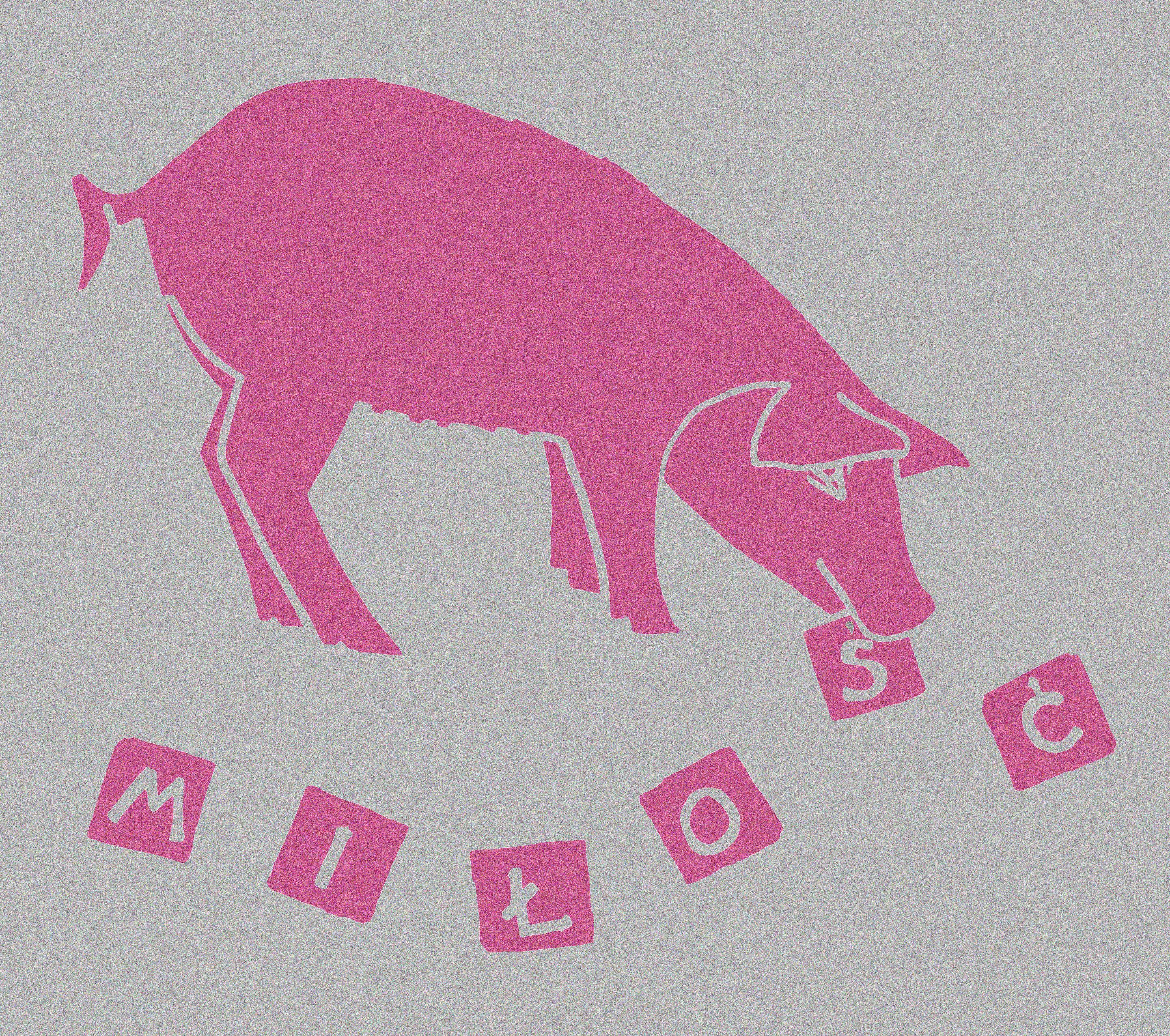 swinia-milosci